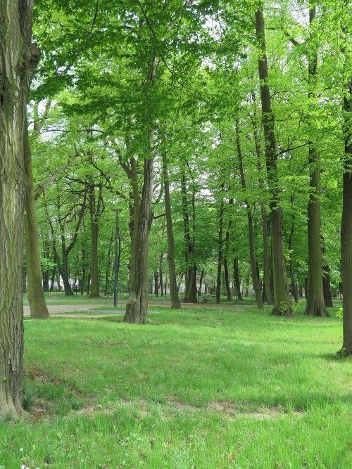 Zabytkowy park nabierze nowego blasku, UG w Pawłowicach